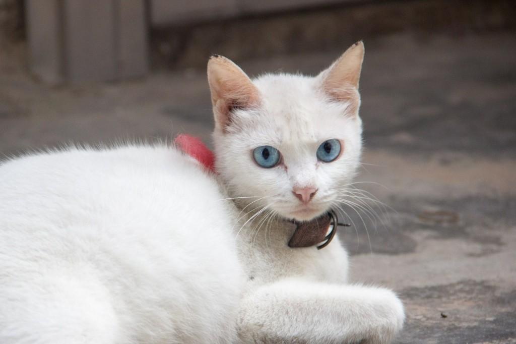 cat-538035_1280