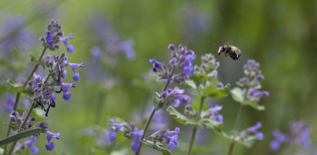 fur-bee-784694_1920