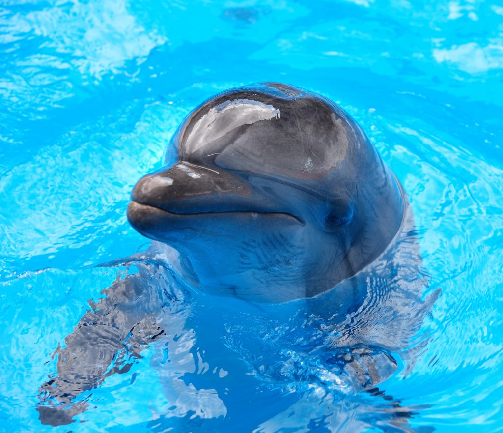 Happy dolphin in blue water.