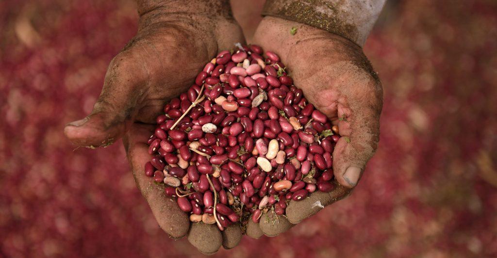 beans6-c42a6edbe49264fb6e4c7cb22a761da0